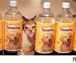 thirstydogwater